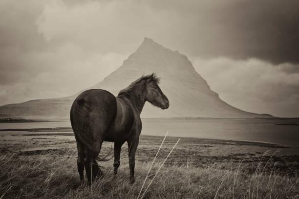 Black Horse and Kirkjufell Mountain:スマホ壁紙(壁紙.com)
