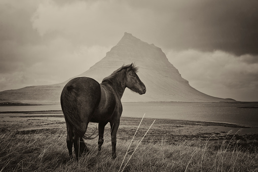 Sepia Toned「Black Horse and Kirkjufell Mountain」:スマホ壁紙(15)