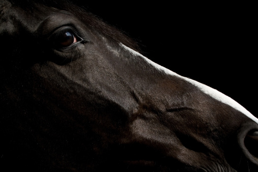 Horse「Black horse Portrait」:スマホ壁紙(10)