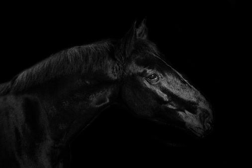Horse「Black horse on black background」:スマホ壁紙(11)