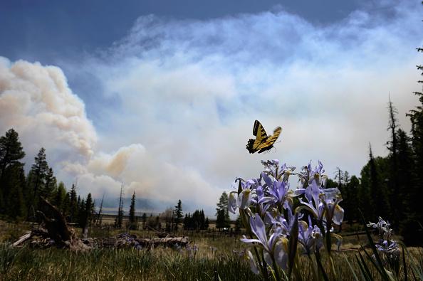 Arizona「Massive Arizona Wildfire Continues To Spread, Threatening Nearby Towns」:写真・画像(18)[壁紙.com]
