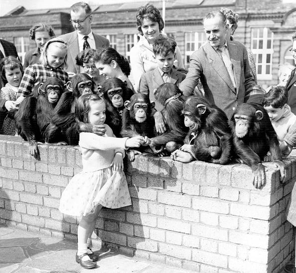 Primate「Cheeky Monkeys」:写真・画像(19)[壁紙.com]