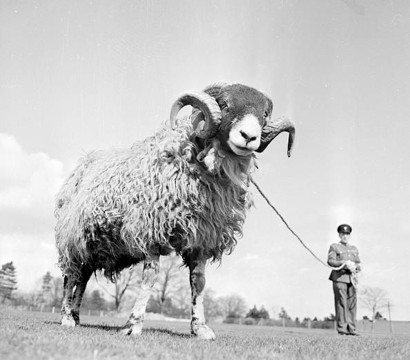 Obsolete「Lucky Ram」:写真・画像(14)[壁紙.com]