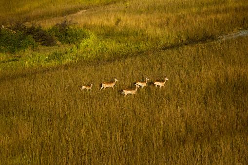 赤ちゃん「A Small Group of Impalas Running」:スマホ壁紙(11)