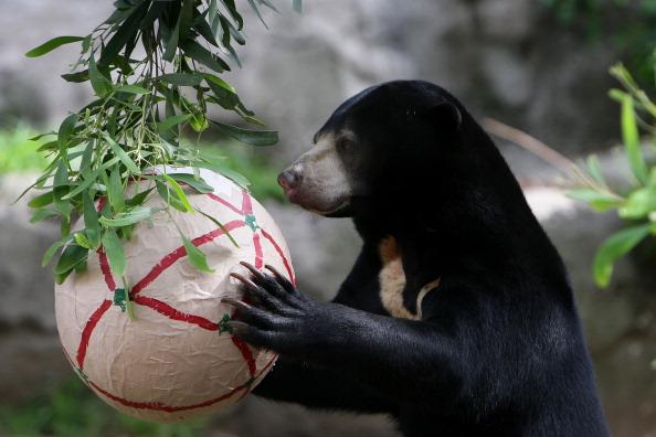 Lisa Maree Williams「Taronga Zoo Animals Recieve Christmas Gifts」:写真・画像(4)[壁紙.com]