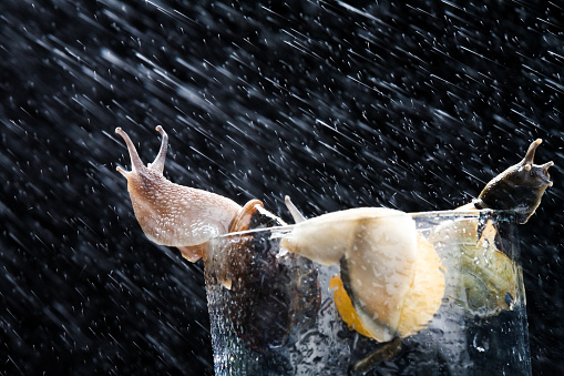 snails「Snails on Glass in Rain」:スマホ壁紙(15)