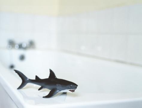 Animal Fin「Toy Shark in Bathroom」:スマホ壁紙(14)