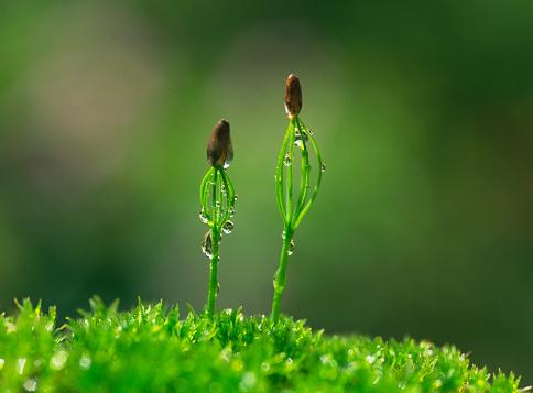 新鮮「Pine tree sprouts」:スマホ壁紙(5)