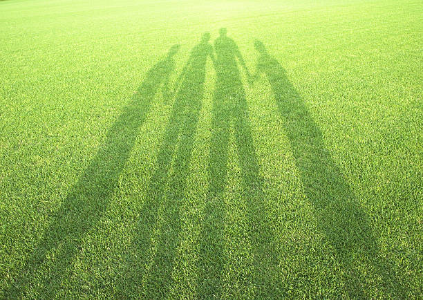 Shadow in the field of grass:スマホ壁紙(壁紙.com)