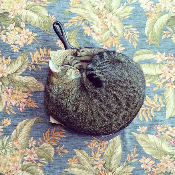 Cat in the Skillet:スマホ壁紙(壁紙.com)