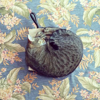 Mischief「Cat in the Skillet」:スマホ壁紙(12)
