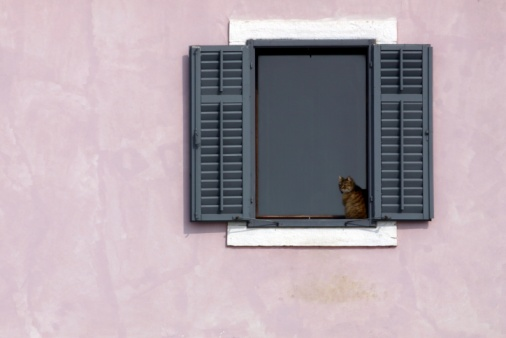 Accessibility「Cat in the window」:スマホ壁紙(11)