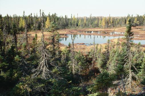 見渡す「Remote and rugged wilderness in Quebec, Canada」:スマホ壁紙(8)