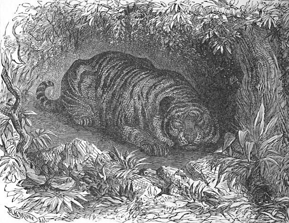 Big Cat「An After-Dinner Nap Circa 1900」:写真・画像(9)[壁紙.com]