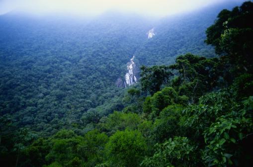 Amazon Rainforest「Amazon Jungle」:スマホ壁紙(8)