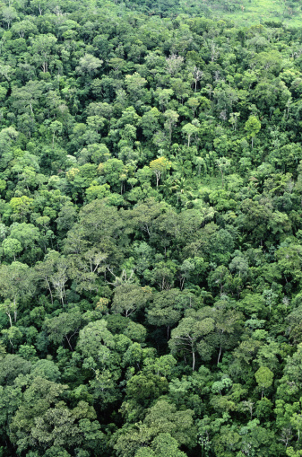 Amazon Rainforest「Amazon Jungle」:スマホ壁紙(0)
