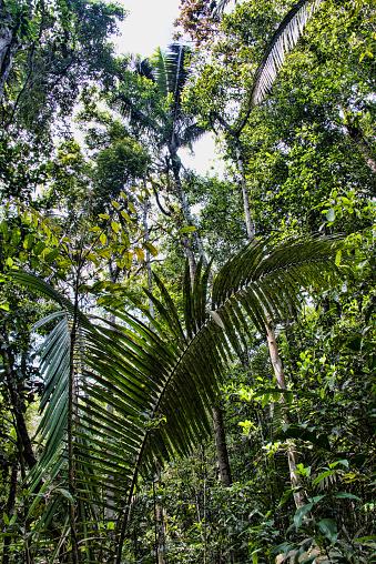 Amazon Rainforest「Amazon Jungle」:スマホ壁紙(10)