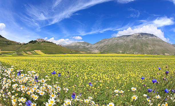 Oilseed and rapeseed field in Monte Vettore in Umbria, Italy:スマホ壁紙(壁紙.com)