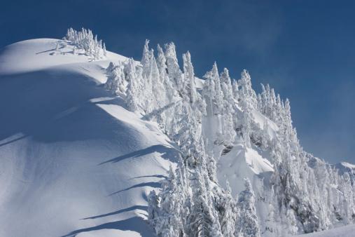 Snowdrift「Snow encased trees on Kulshan Ridge Heather Meadows Recreation Area, North Cascades, Washington, USA」:スマホ壁紙(13)
