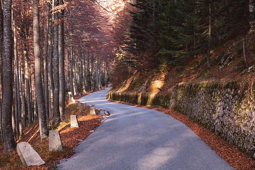 Julian Alps「Lush autumn foliage along the famous Mangart pass through the Julian Alps in Slovenia」:スマホ壁紙(11)