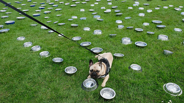 Bestpix「Thousands Of Dogs Take Part In The Great North Charity Dog Walk」:写真・画像(12)[壁紙.com]