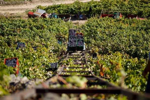 Homemade「The Grape Harvest Is Gathered In On The Slopes Surrounding The Sil River」:写真・画像(7)[壁紙.com]