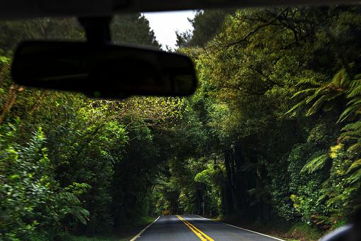 Empty Road「Trees form a tunnel around a road.」:スマホ壁紙(4)