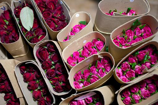 Fair Trade「Kenya, Thika, Simbi Roses fair trade farm」:スマホ壁紙(19)