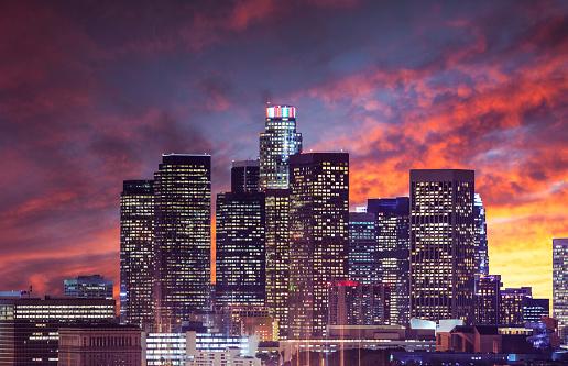 ヤシ「ロサンゼルスのダウンタウン 」:スマホ壁紙(16)