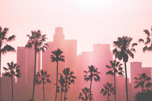 ヤシ「ロサンゼルスのダウンタウン 」:スマホ壁紙(9)