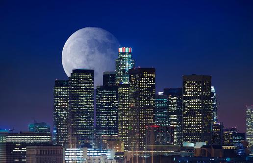 ヤシ「ロサンゼルスのダウンタウン 」:スマホ壁紙(3)