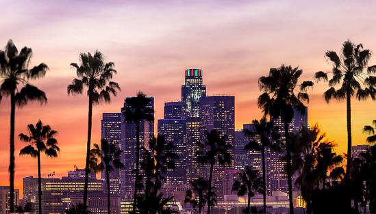 ヤシ「ロサンゼルスのダウンタウン 」:スマホ壁紙(10)