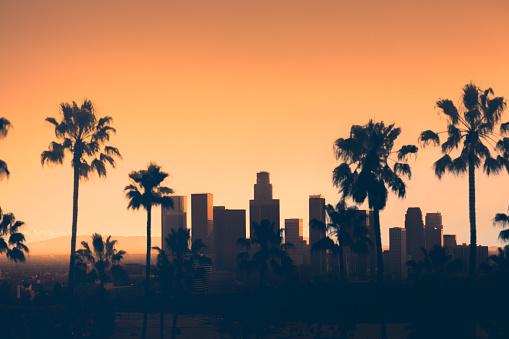 ヤシ「ロサンゼルスのダウンタウン 」:スマホ壁紙(18)