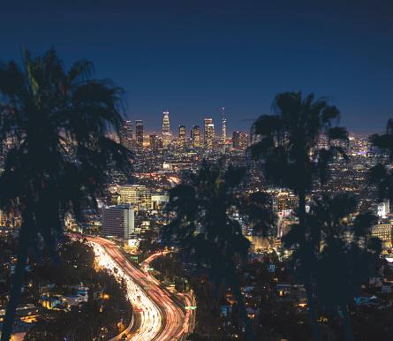 ヤシ「ロサンゼルスのダウンタウン 」:スマホ壁紙(12)