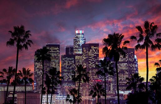 ヤシ「ロサンゼルスのダウンタウン 」:スマホ壁紙(19)
