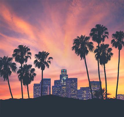 ヤシ「ロサンゼルスのダウンタウン 」:スマホ壁紙(13)