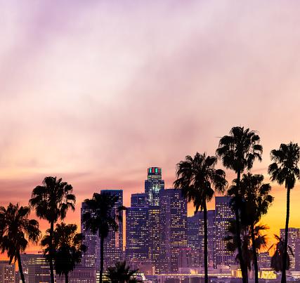 ヤシ「ロサンゼルスのダウンタウン 」:スマホ壁紙(15)