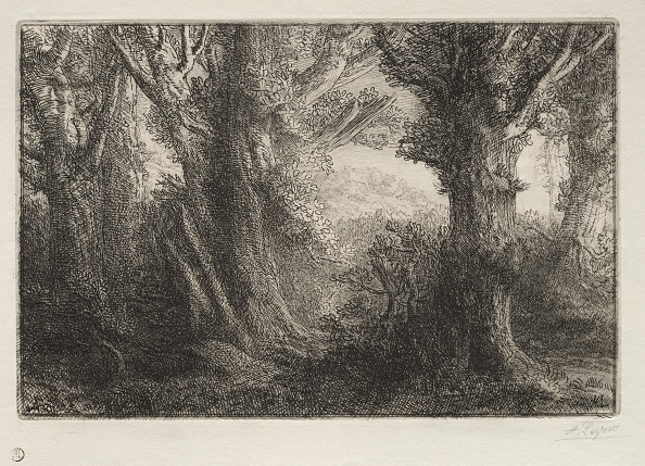 Etching「In The Forest At Conteville. Creator: Alphonse Legros (French」:写真・画像(10)[壁紙.com]