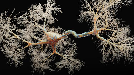 Intelligence「Neuron cell close-up view」:スマホ壁紙(19)