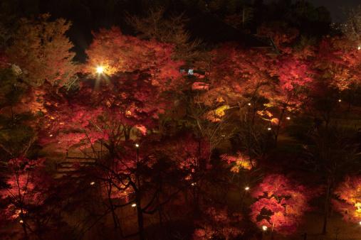 京都の夜「Colored leaves at night」:スマホ壁紙(10)
