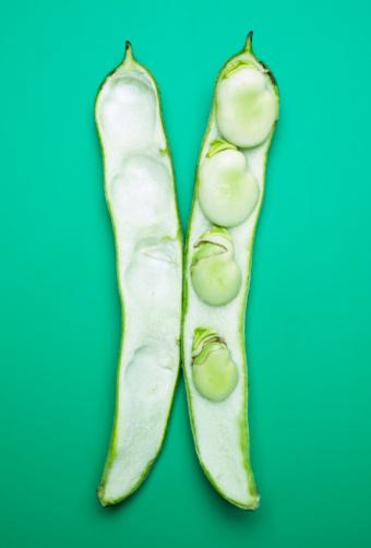 Bush Bean「Split Fava bean pod」:スマホ壁紙(17)