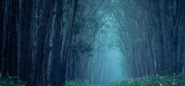 Dark Forest Path:スマホ壁紙(壁紙.com)