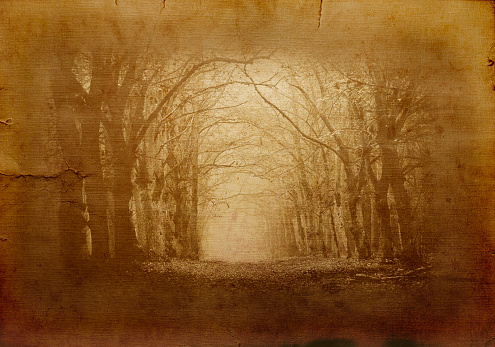 Auto Post Production Filter「Dark Forest」:スマホ壁紙(19)