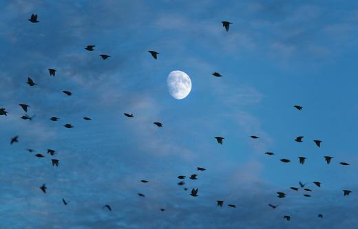 月面「スターリング月」:スマホ壁紙(5)