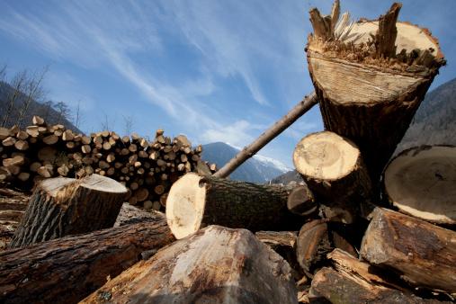 Deforestation「Italy, Trento, Trunks」:スマホ壁紙(3)