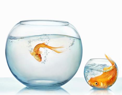 Digital Composite「Large and small goldfish」:スマホ壁紙(2)