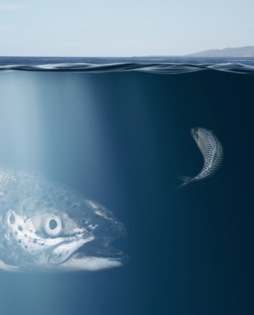 Water Surface「Large and Small Fish Underwater」:スマホ壁紙(7)