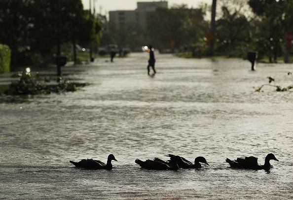 Naples - Florida「Powerful Hurricane Irma Slams Into Florida」:写真・画像(7)[壁紙.com]