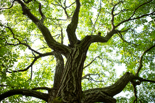 Walnut「France, St. Romans, Plantation of walnut trees」:スマホ壁紙(19)