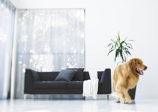 Dog and sofa:スマホ壁紙(壁紙.com)